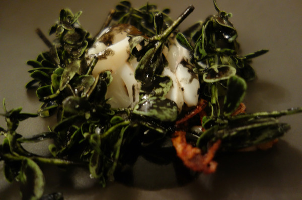Le_chateaubriand_squid